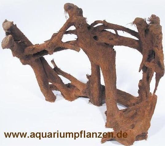 1 Mangrovenwurzel 30-40 cm, Wurzel, Mangrove