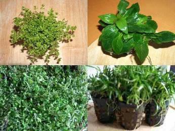 Vordergrundmix 15 Töpfe, 7 Sorten Aquarienpflanzen
