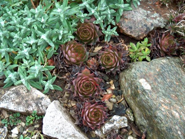 3 getopfte Pflanzen für die Grabbepflanzung in Gärtnerqualität, mindestens 3 Sorten, Grab