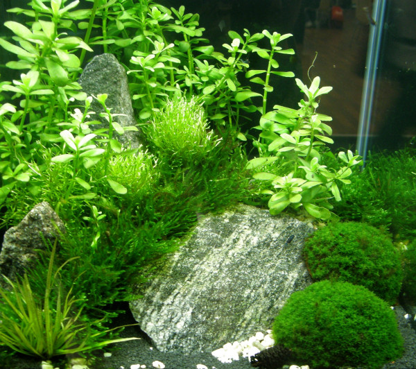 Nano VII Set Aquarium 20-30 l Pflanzen, Kies, Deko