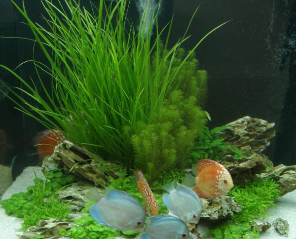 Nano IX Set Aquarium 30 l, Pflanzen, Kies, Deko