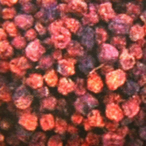25 kg Ebereschenfrüchte lose, Eberesche, Tierfutter