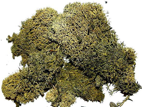 1 handgrosse Portion Dekomoos grün zum aufbinden und dekorieren, Moos