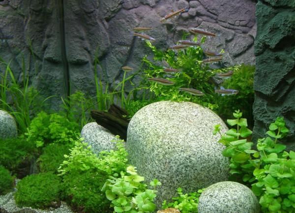 Nano XI Set Aquarium 20-30 l, Pflanzen, Kies, Deko