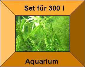 15 Töpfe + 15 Bund Wasserpflanzen, Aquarienpflanze