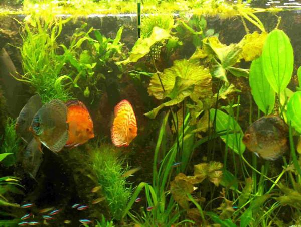 Premium Wasserpflanzen Sortiment für 200 l Aquarium