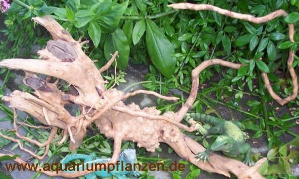 rote Moorwurzel 25-35 cm, Wurzel, Finger Wood