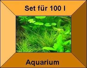 Premium Wasserpflanzen Set für 100 l Aquarium