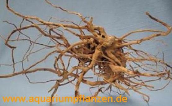 1 Stück Finger Wood 10-20 cm, Deko, Wurzel