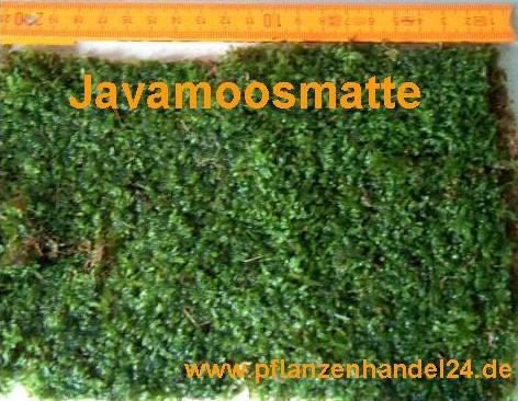 Javamoosmatte 21x14 cm, Javamoos, Moos, Garnelen