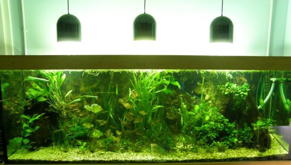 Aquarienpflanzen Set für Piranha Salmler Barben