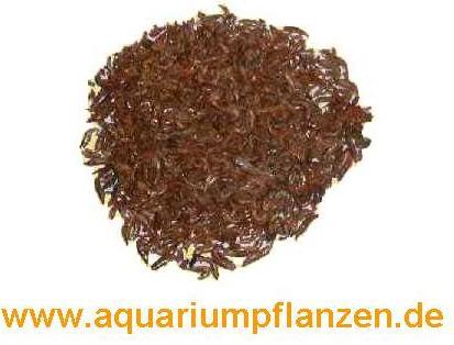 250 ml getrocknete Süßwasser Shrimps FD