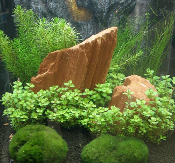 1 bepflanzter Stein Pflanzenauswahl