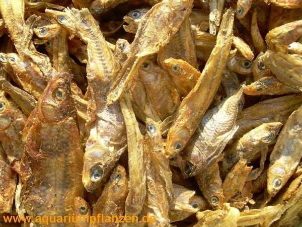 250 g getrocknete Fische für Schildkröten