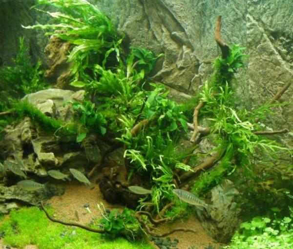 Set für 300 l Aquarium, Pflanzen, Kies, Deko (XIX)