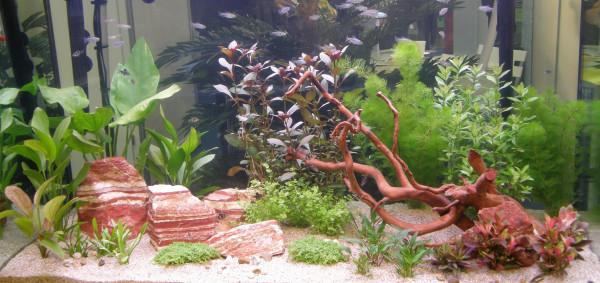 Wasserpflanzen Set für 400 - 450 l Aquarium (16)