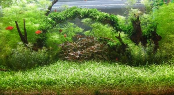 Hintergrundmix, 10 Töpfe Aquarienpflanzen 7 Sorten