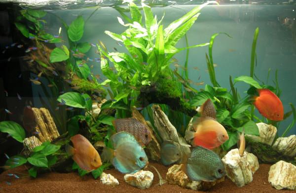 Aquariumpflanzen Set für 200 l Diskus Aquarium