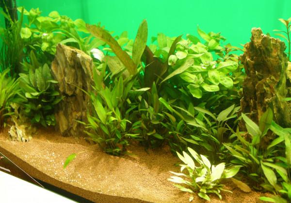 Wasserpflanzen Set für 200-300 l Aquarium (4)