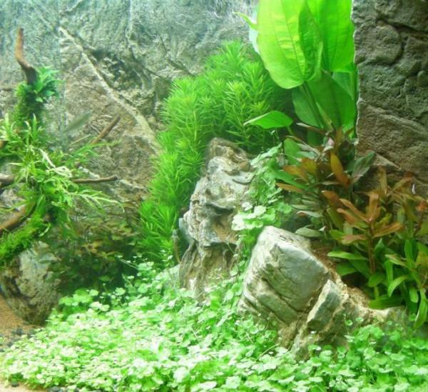 Set für 200 l Aquarium, Pflanzen, Kies, Deko (XXV)