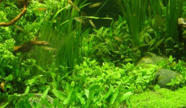 Wasserpflanzen Set für 250-300 l Aquarium (23)
