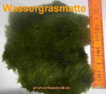1 Matte Wassergras (ca. 80 cm²) Wassergrasmatte