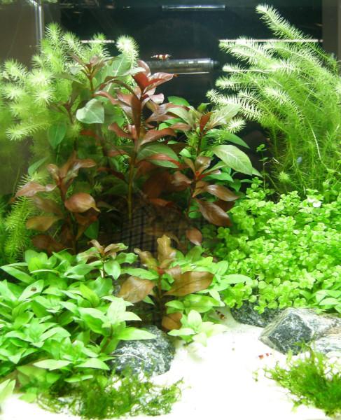 140 Aquariumpflanzen, 20 Bunde und 10 Topfpflanzen