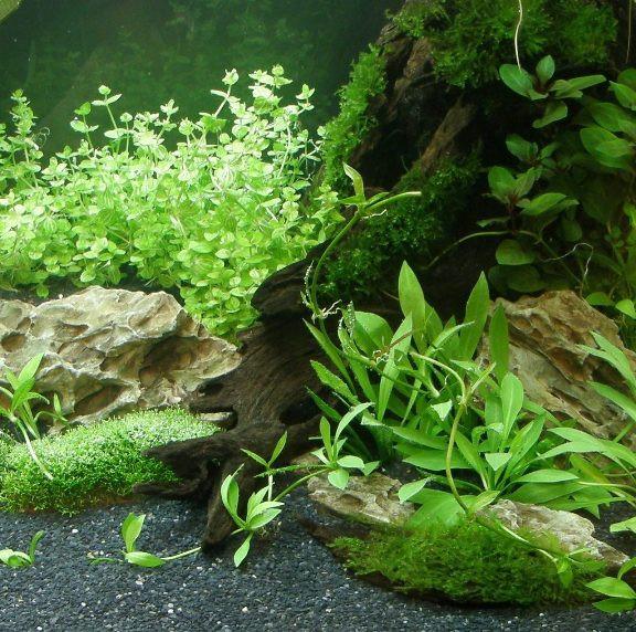 Wasserpflanzen Sortiment für 100 l Aquarium (18)