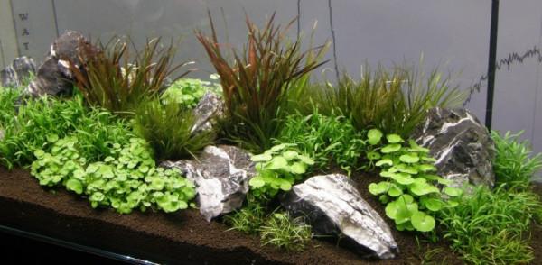 Hintergrundmix, 5 Töpfe Aquarienpflanzen, 5 Sorten