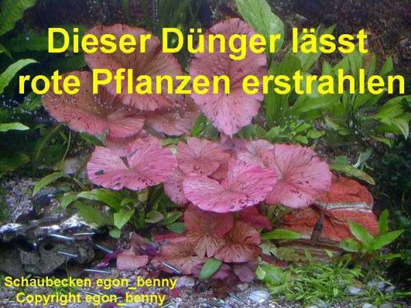 Wasserpflanzendünger + Wasseraufbereiter