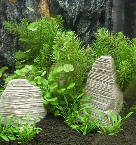 Nano XII Set Aquarium 15-25 l Pflanzen, Kies, Deko