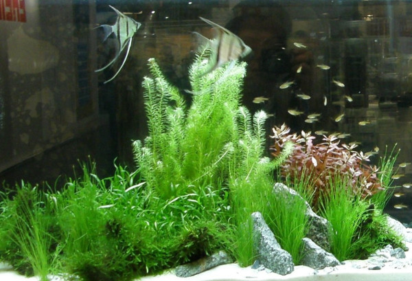 Aquarium Set 80-100 l ,Pflanzen, Kies, Deko (I)