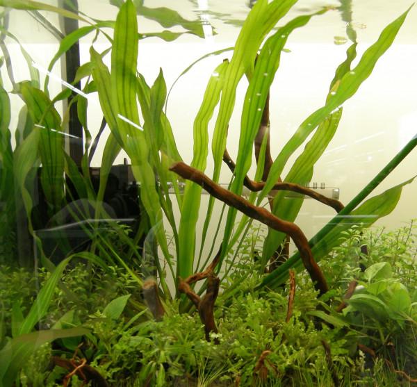 100 Aquariumpflanzen, 15 Bunde und 7 Topfpflanzen