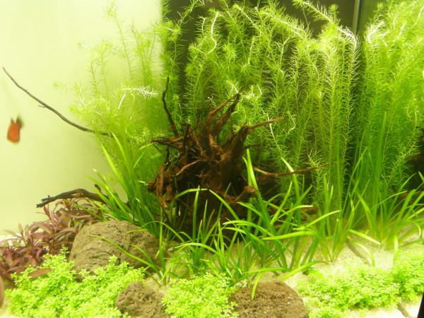 Nano V, Set Aquarium 30-40 l Pflanzen, Kies, Deko