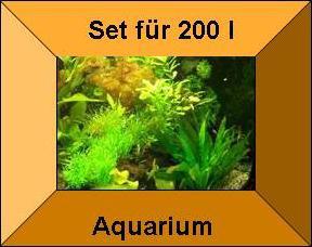 7 Töpfe + 7 Bund Wasserpflanzen, Aquarienpflanzen