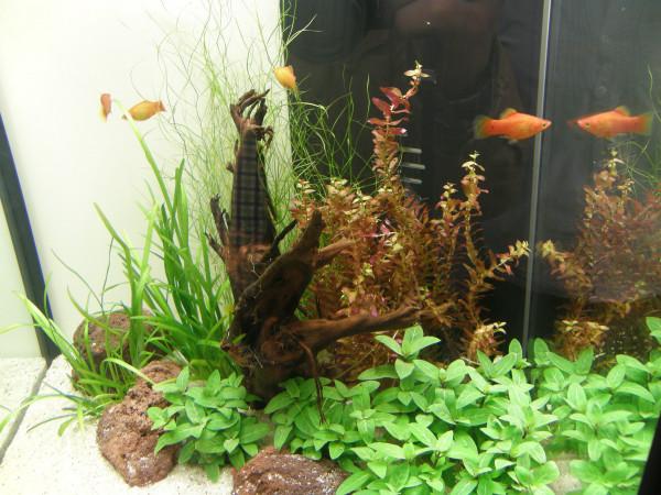 Nano VI, Set Aquarium 20-30 l Pflanzen, Kies, Deko