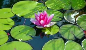 10 Uferpflanzen, 1 Zwergseerose, 4 Schwimmpflanzen