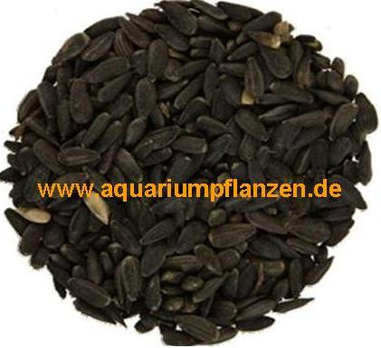 2,5 kg schwarze Sonnenblumenkerne, Vogelfutter