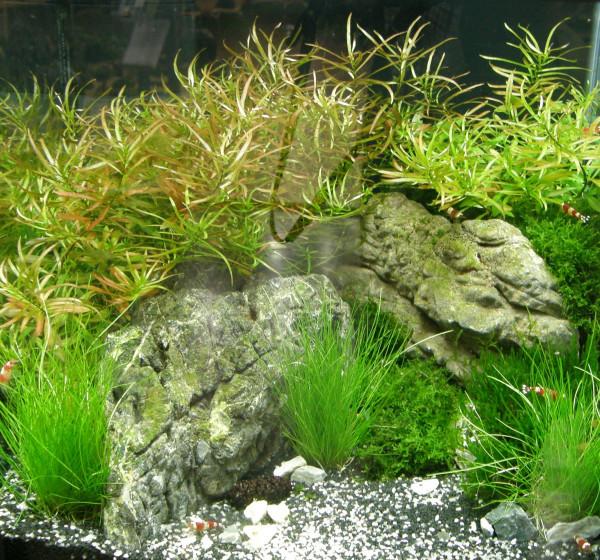 Nano 8, Wasserpflanzenset für Nanoaquarium 30-40 l