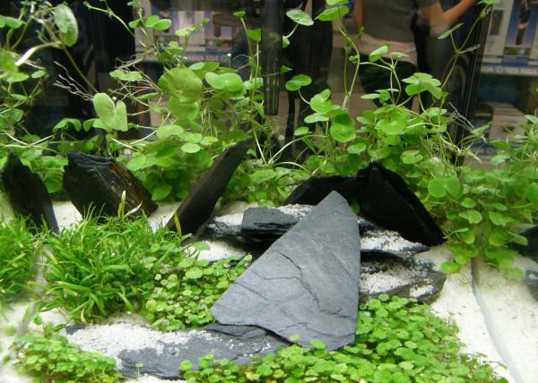 Aquarium Set 200 l Pflanzen, Kies, Deko (XI)