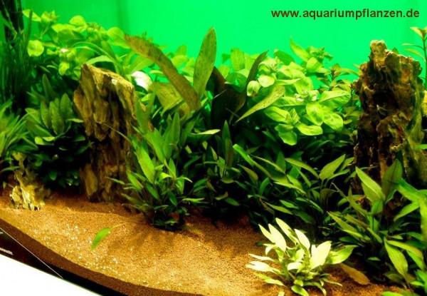 Mühlan - Wasserpflanzen Hintergrundmix, 4 Bund Aquarienpflanzen + 4 Wasserpflanzentöpfe inkl. Wasser