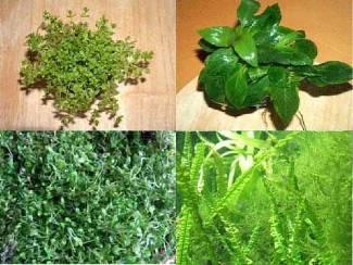 Vordergrundsortiment, 4 Sorten Wasserpflanzen