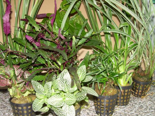 1 Topf Dekorpflanze für Paludarium, Terrarium