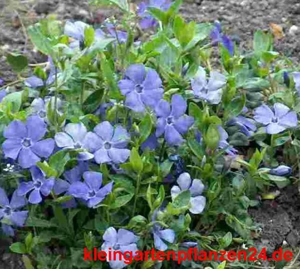 10 getopfte Pflanzen für den Balkon, Blumenkasten in Gärtnerqualität, mindestens 3 Sorten