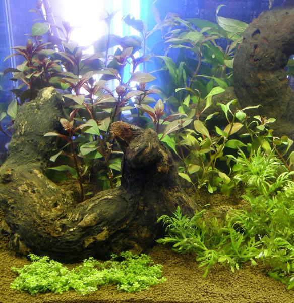 220 Aquariumpflanzen, 30 Bunde und 15 Topfpflanzen