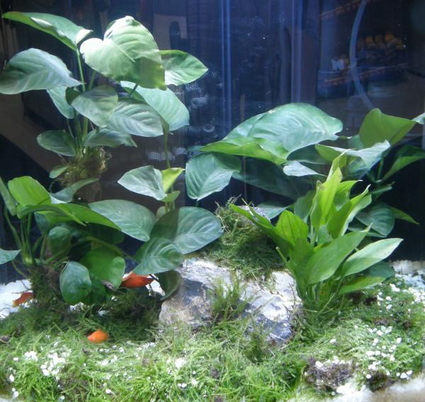Aquarium Set für 80 l, Pflanzen, Kies, Deko (XIII)