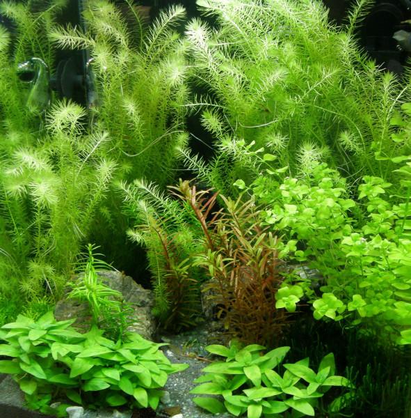 75 Aquarienpflanzen, 10 Bunde und 5 Topfpflanzen